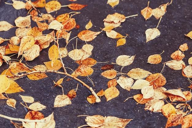 Fogliame giallo di autunno su asfalto in parco autunnale
