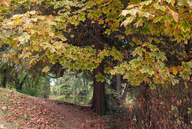 Fogliame in stanley park a vancouver, columbia britannica, canada