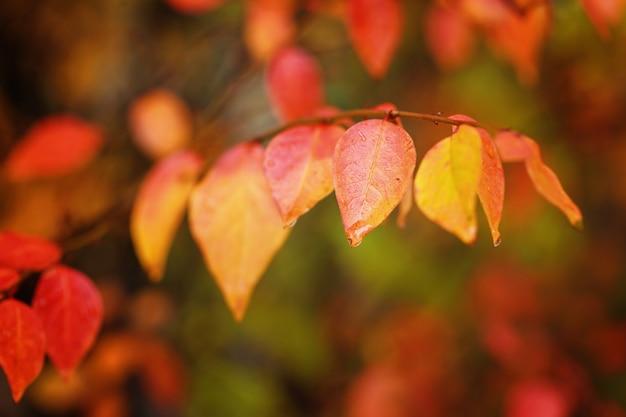 Fogliame variopinto nel parco di autunno nel giorno piovoso. foglie rosse d'autunnali