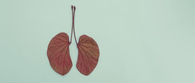 Foglie a forma di polmone