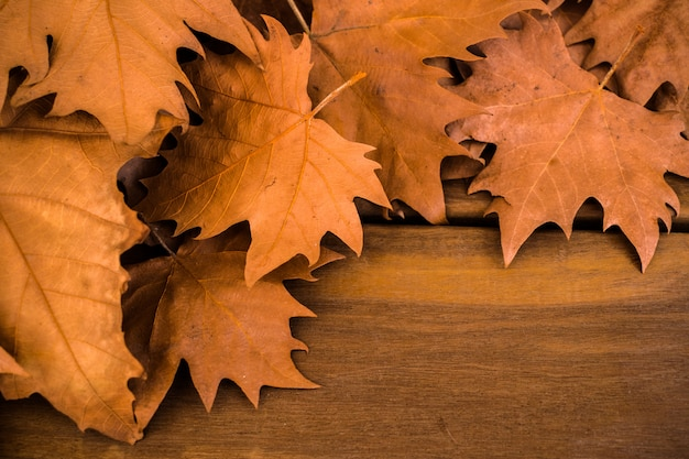 Foglie asciutte di autunno su superficie di legno