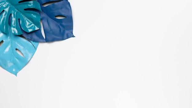 Foglie blu su sfondo bianco con spazio di copia