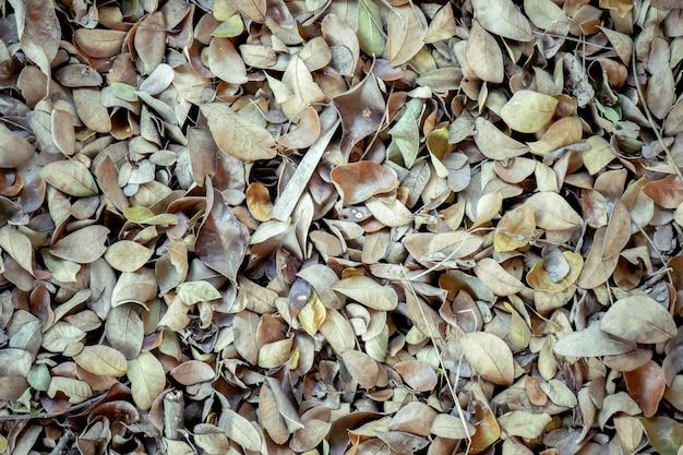 Foglie cadute autunno astratte di struttura del fondo su suolo forestale marrone