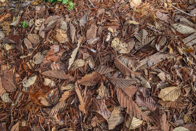 Foglie cadute autunno variopinto sul fondo marrone del suolo forestale.