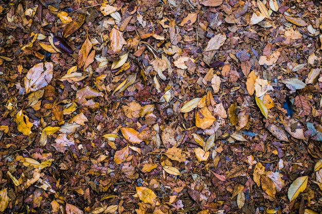 Foglie cadute autunno variopinto sul fondo marrone del suolo forestale