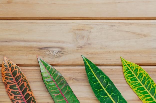 Foglie colorate disposte su una scena di legno marrone.