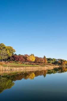 Foglie d'autunno. scenario autunnale. lago. parco olimpico di seoul in corea del sud.