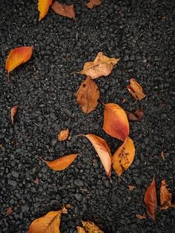 Foglie d'autunno su cemento scuro