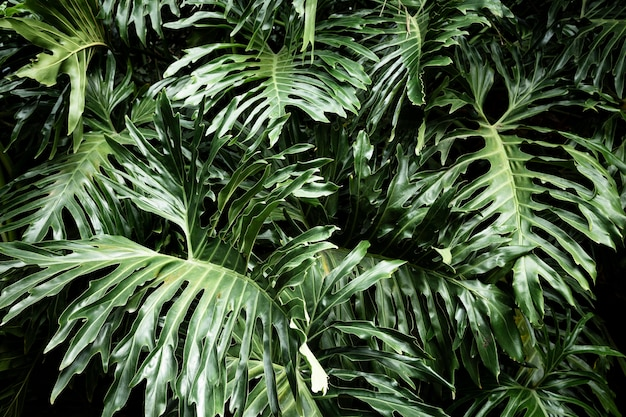 Foglie della pianta tropicale di vista frontale