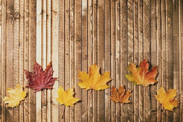 Foglie di acero autunno