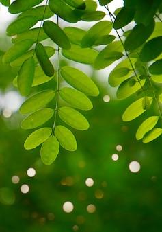 Foglie di albero verde strutturato nella natura in estate, sfondo verde
