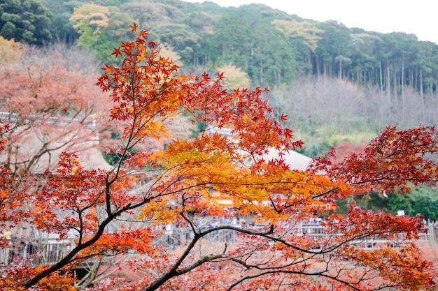 Foglie di autunno a kiyomizu-dera a kyoto, in giappone