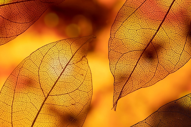 Foglie di autunno arancio astratte vivide