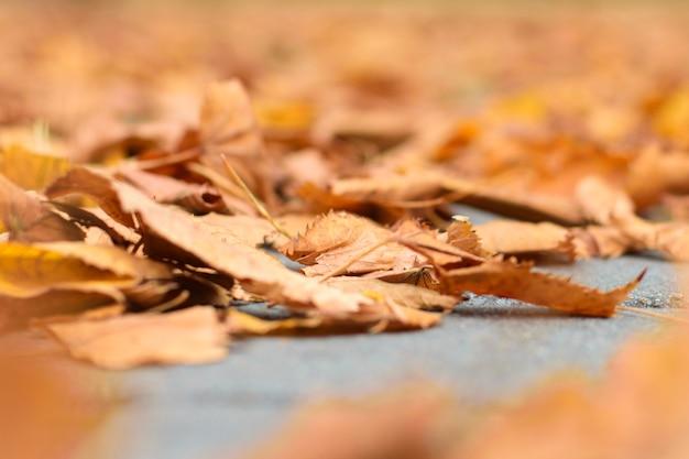 Foglie di autunno asciutte sulla strada nel parco, priorità alta vaga, fuoco selettivo