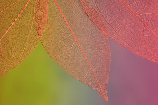 Foglie di autunno colorate rosse astratte