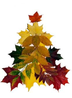 Foglie di autunno colorate su bianco.