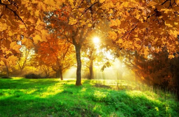 Foglie di autunno con il fondo della sfuocatura nella transilvania