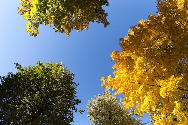 Foglie di autunno con lo sfondo del cielo blu