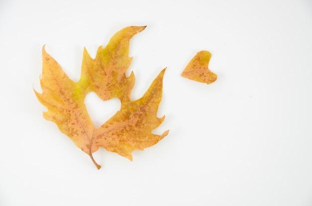 Foglie di autunno di vista superiore con cuore
