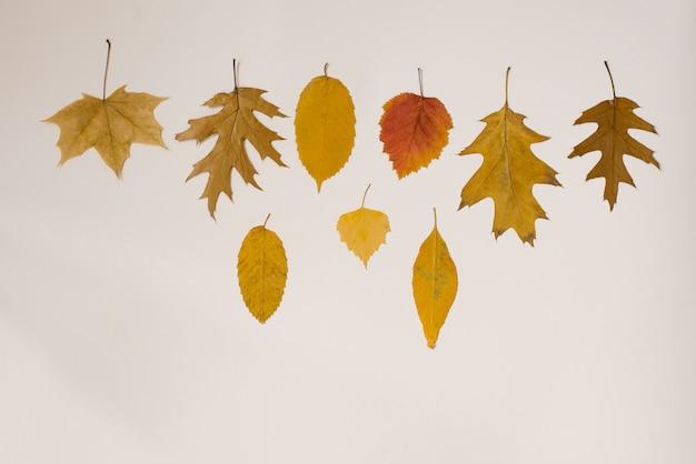 Foglie di autunno gialle cadute su beige, nevicate autunnali e caduta delle foglie