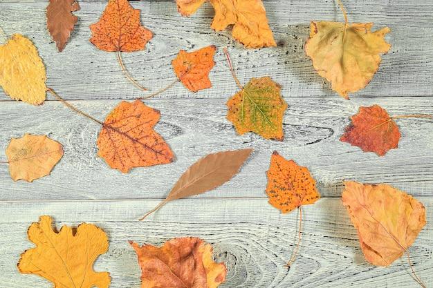 Foglie di autunno gialle su un vecchio fondo di legno leggero