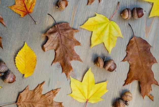 Foglie di autunno giallo e ghiande su uno sfondo di albero