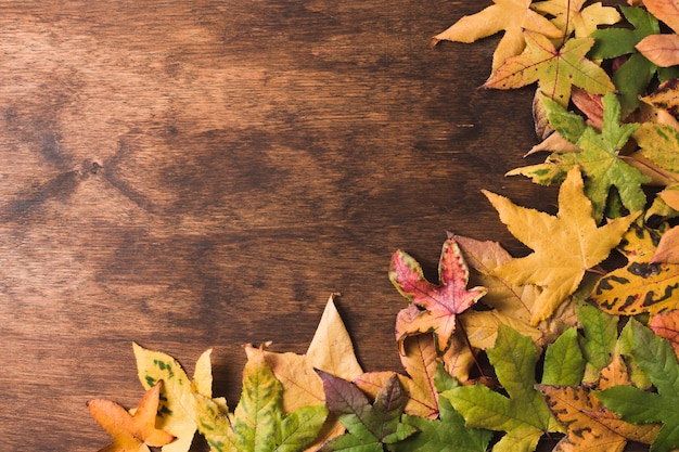 Foglie di autunno piatto lo spazio della copia