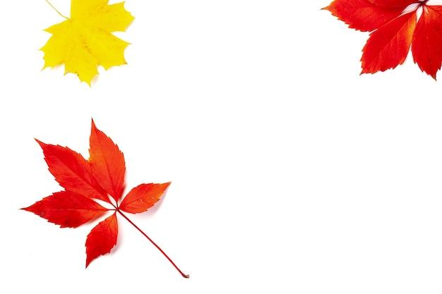 Foglie di autunno rosso e giallo su sfondo bianco, vista dall'alto