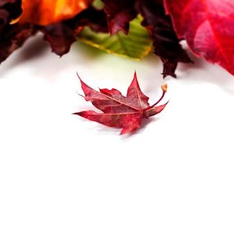 Foglie di autunno su sfondo bianco