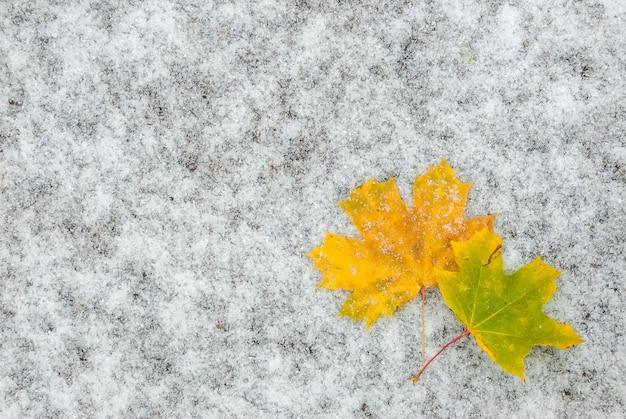 Foglie di autunno sulla neve sul terreno