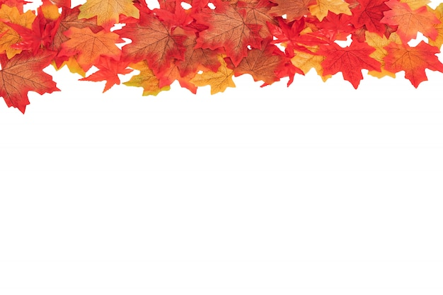 Foglie di autunno variopinte dell'acero di vista superiore su bianco isolate, concetto di autunno