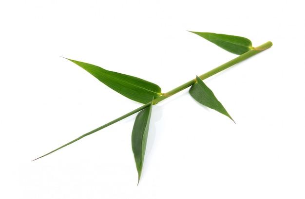 Foglie di bambù verdi