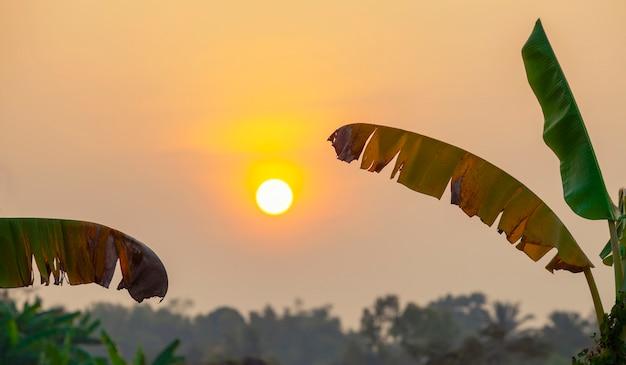 Foglie di banana con grande sole al tramonto in campagna