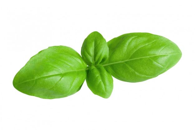Foglie di basilico verde fresco isolato su priorità bassa bianca con il percorso di residuo della potatura meccanica. colpo a macroistruzione del primo piano del cibo sano.