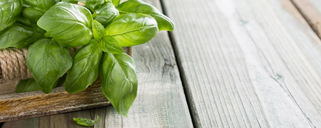 Foglie di basilico verde
