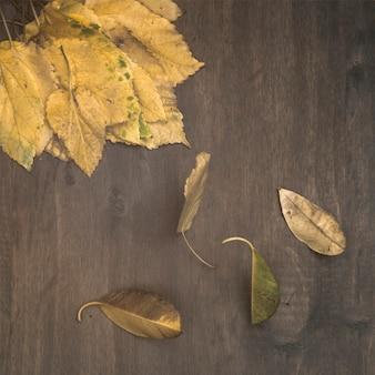 Foglie di betulla secche sul tavolo