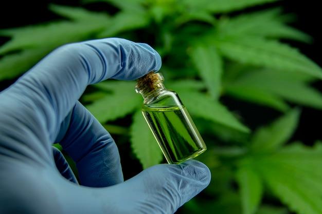 Foglie di cannabis di una pianta