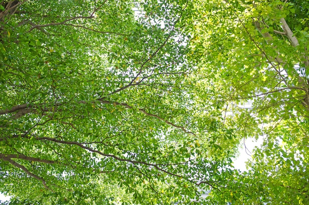 Foglie di colore verde chiaro che si verificano al mattino. due luci dalla cima del cielo.