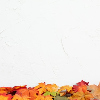 Foglie di colorul con fondo bianco