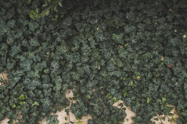 Foglie di edera verde vintage in toni pastello