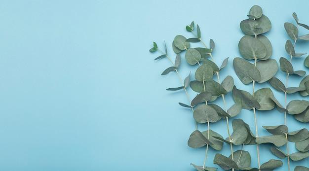 Foglie di eucalipto su uno sfondo colorato