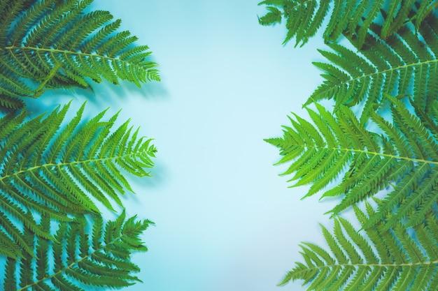 Foglie di felce su sfondo blu pastello. vista dall'alto, isolato con lo spazio della copia.