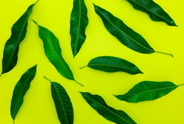 Foglie di mango su sfondo di carta colorata