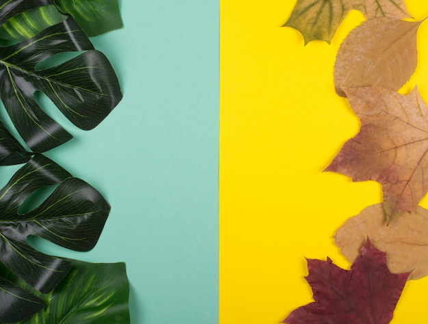 Foglie di monstera e foglie di acero autunno