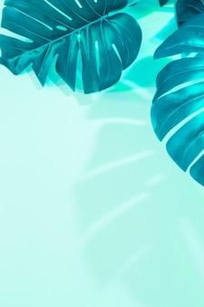 Foglie di mostro su sfondo verde menta