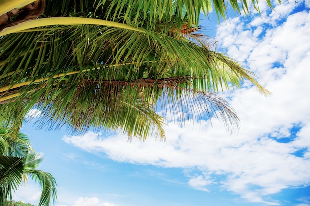 Foglie di palma al cielo di estate.