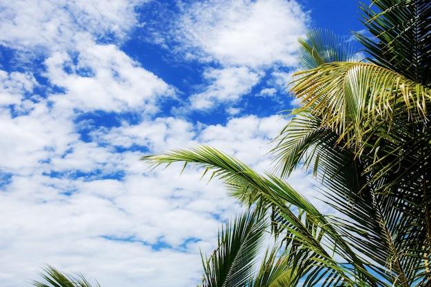 Foglie di palma al cielo in estate.