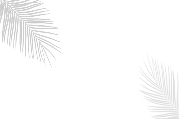 Foglie di palma bianche del nero astratto dell'ombra sul fondo bianco della parete