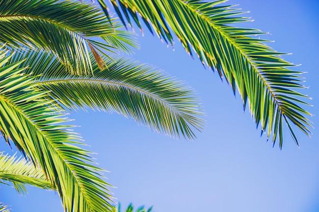 Foglie di palma contro il cielo messa a fuoco selettiva natura