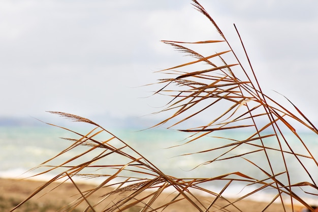 Foglie di palma contro un cielo blu, spiaggia sabbiosa e acqua di mare, prima di una tempesta imminente.